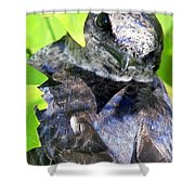 Baby Bluejay Peek Shower Curtain by Karen Wiles