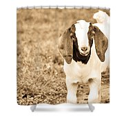 Baby Boer Goat Shower Curtain