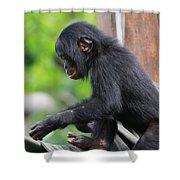 Baby Bonobo Shower Curtain