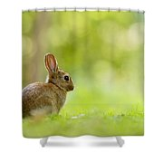 Baby Bunny In The Forest Shower Curtain
