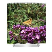 Baby Butterfly Shower Curtain