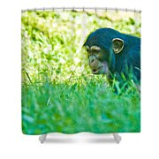 Baby Chimp In The Grass Shower Curtain