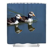 Baby Coots Shower Curtain