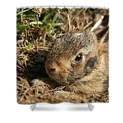 Baby Eastern Cottontail Shower Curtain