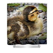 Baby Duck Shower Curtain