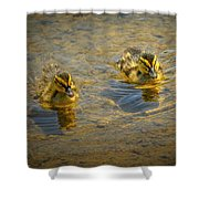 Baby Ducks Shower Curtain