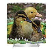 Baby Ducks Shower Curtain