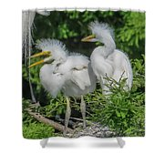 Baby Egrets Shower Curtain