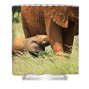 Baby Elephant Feeding Shower Curtain