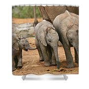 Baby Elephant Trio Shower Curtain