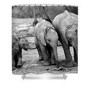 Baby Elephant Trio Bw Shower Curtain