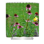 Baby Finch Shower Curtain