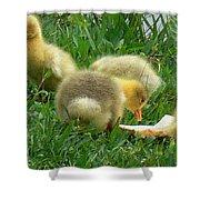 Baby Geese-mayer Lake-savannah Shower Curtain