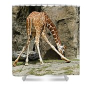 Baby Giraffe 1 Shower Curtain