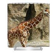 Baby Giraffe 4 Shower Curtain