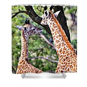 Baby Giraffes Shower Curtain by Perla Copernik