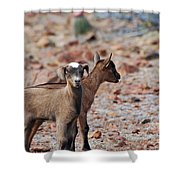 Baby Goat Pair Shower Curtain