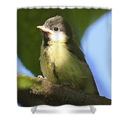 Baby Coal Tit Shower Curtain