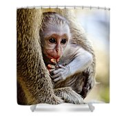 Baby Green Monkey - Barbados Shower Curtain