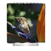 Baby Hummingbird On Flower Shower Curtain