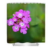 Flower - Baby In Pink Shower Curtain