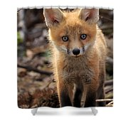Baby In The Wild Shower Curtain