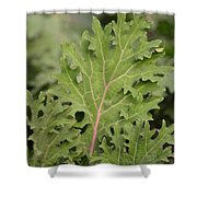 Baby Kale Shower Curtain
