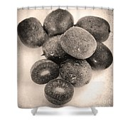 Baby Kiwi Distressed Sepia Shower Curtain
