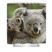 Baby Koala With Mom Shower Curtain