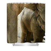 Baby Lily Elephant Shower Curtain