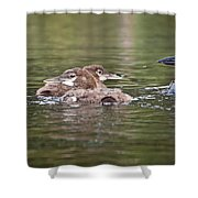 Baby Loons And Mom Shower Curtain