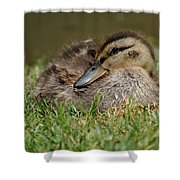 Baby Mallard Shower Curtain