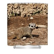 Baby Meerkat Shower Curtain