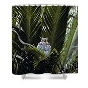 Baby Mockingbird Shower Curtain