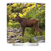 Baby Moose Baxter State Park Shower Curtain