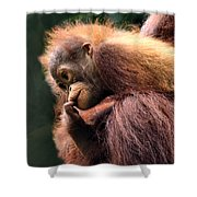 Baby Orangutan Borneo Shower Curtain