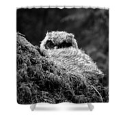 Baby Owl 3 Shower Curtain