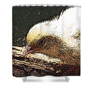 Baby Quail In Pastel Shower Curtain