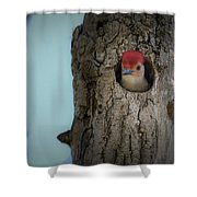 Baby Red Bellied Woodpecker Shower Curtain