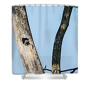 Baby Red-headed Woodpecker Shower Curtain