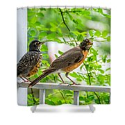 Baby Robin - Ready...just Do What I Do Shower Curtain