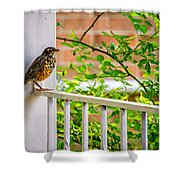 Baby Robin - Such A Big World Shower Curtain