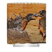 Baby Robins Feeding  An5141-14 Shower Curtain