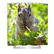 Baby Rock Squirrel  Shower Curtain