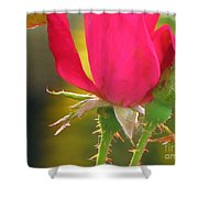 Baby Roses Shower Curtain