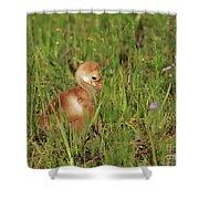 Baby Sandhill Crane Chick Shower Curtain