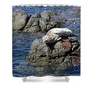 Baby Sea Lion On Rock At San Juan Island Shower Curtain
