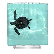 Baby Sea Turtle Shower Curtain by Ellen Henneke