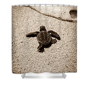 Baby Sea Turtle Shower Curtain