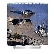 Baby Seals Shower Curtain